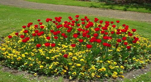bunte Blumen